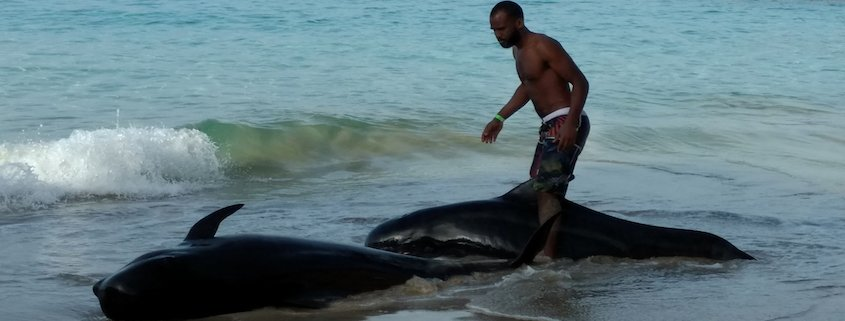 maio two stranded whales